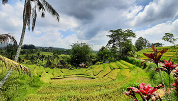 Viajes a Indonesia - Bali Arrozales
